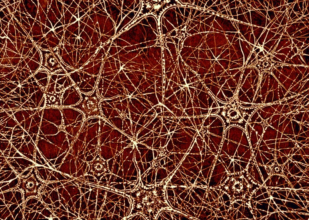 Células neuronales.